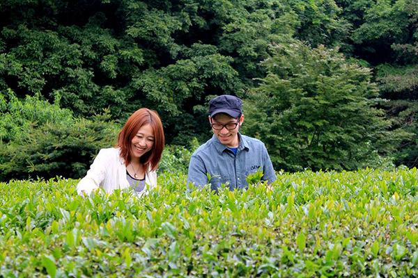 お茶摘み体験 栃木県佐野からのお客様